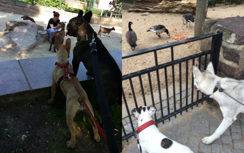 zoohund.jpg